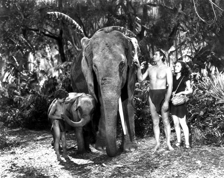 Johnny Sheffield 02 Tarzan Finds a Son scan