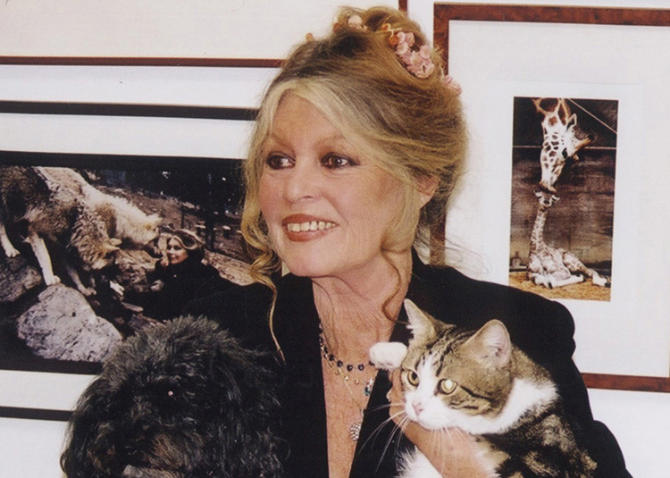 """Brigitte Bardot  """"I can t even go to the dentist without being followed or  being photographed"""" 29a302c8ffe"""